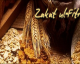 Fin de Ramadan : Et la Zakat el Fitr ?