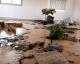 Québec : Une Mosquée profanée, le centre culturel vandalisé
