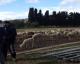 Un berger musulman persécuté par des islamophobes ! | VIDEO témoignage déchirant