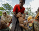 Birmanie : Les champs des Rohingyas qui ont fuit récoltés