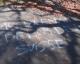 Suisse : Tags islamophobes au carré musulman du cimetière de Lausanne