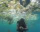 Découvrez la mer de Bali ! – VIDEO
