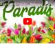 Aimes tu le paradis ? | VIDEO